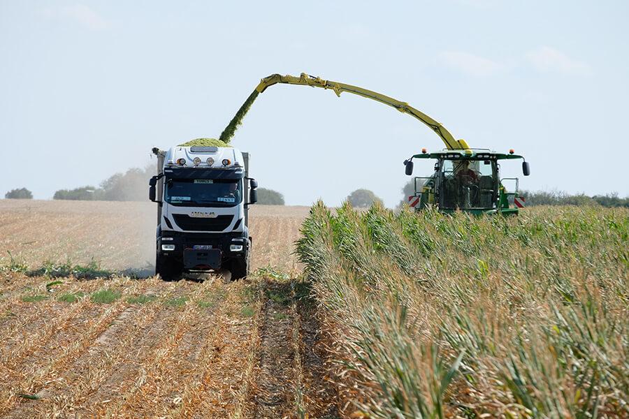 Maisernte - Transport von Erntegut